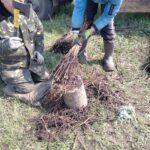 Долинський лісгосп завершив лісопосадочні роботи